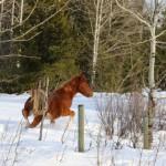 2014-01-16_160-1600-Wild-Horse