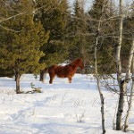 2014-01-16_169-1600-Wild-Horse