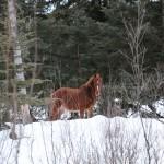 2014-01-21_048-1600-Wild-Horse