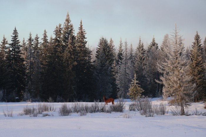2014-01-24_106-1600_Wild-Horse