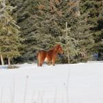2014-01-24_162-1600_Wild-Horse