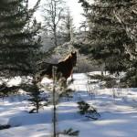 2014-01-24_224-1600_Wild-Horse