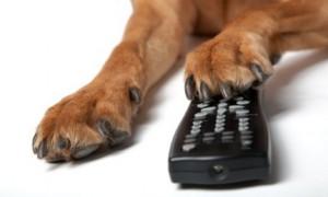 Hund-Fernbedienung