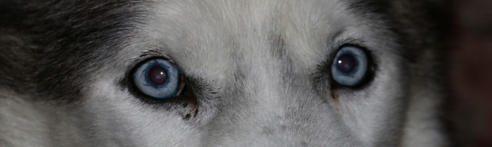 Porthos-Augen-1024